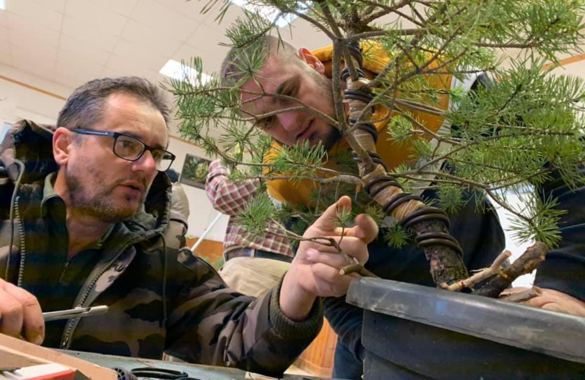 Coaching bonsai personnalisé