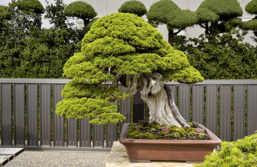 Bonsai, le guide complet