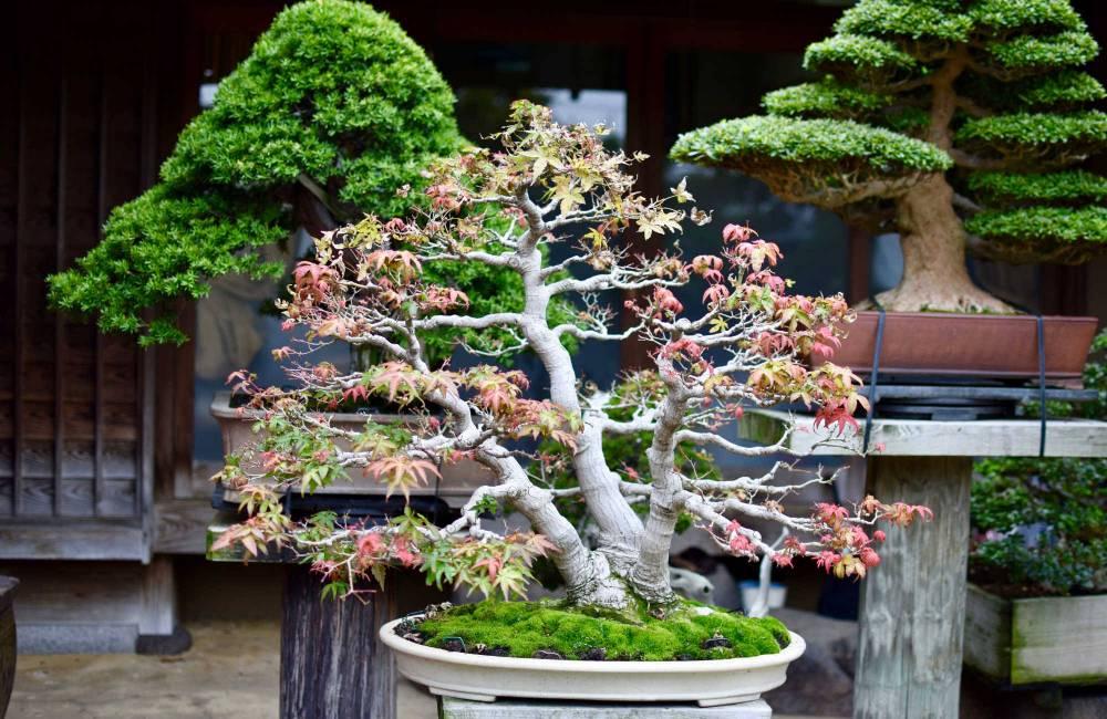 Qu'est-ce qu'un bonsai ?