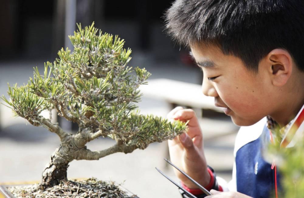 Qui peut faire du bonsai ? Enfants, personnes âgées ?