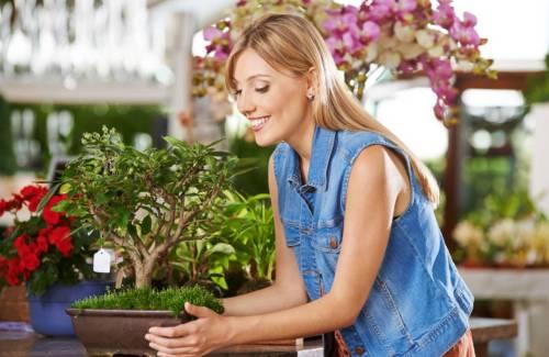 Acheter son premier bonsaï