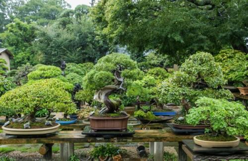 Comment commencer une collection de bonsai ?