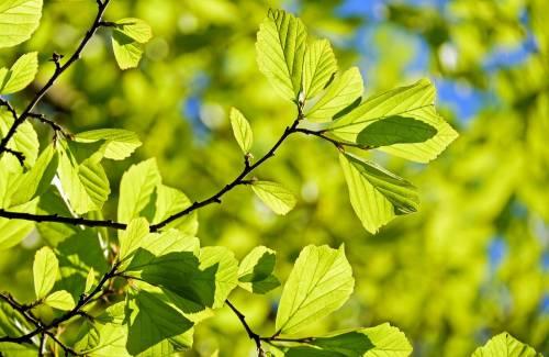 Guide des espèces en bonsai