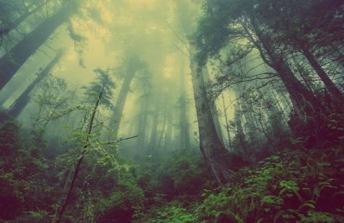 Pourquoi un arbre a-t-il besoin d'oxygène au niveau des racines ?