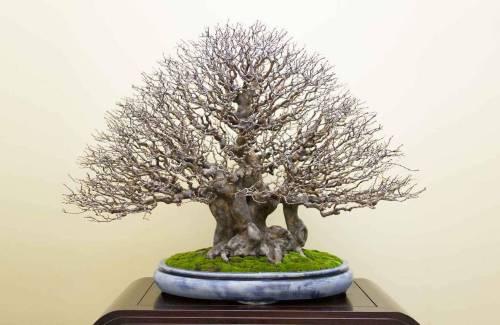 Les bases du bonsai