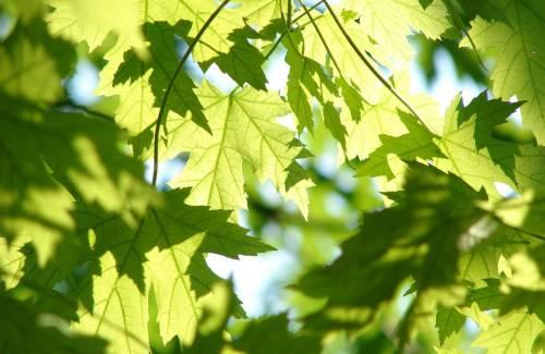 Comment fonctionne la photosynthèse ?