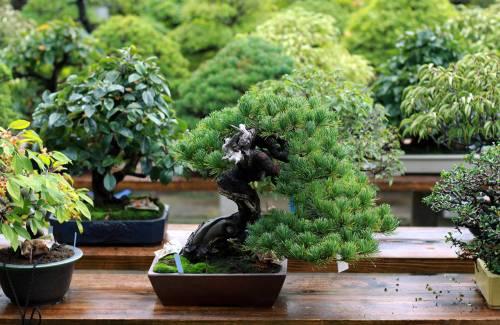 Quand est-ce qu'un bonsai est terminé ?