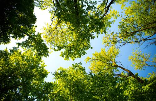 Comment et pourquoi un arbre respire ?