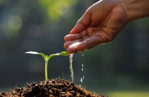 Faire un bonsai à partir de semis