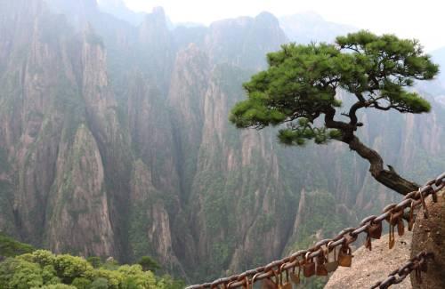 Faire un bonsai à partir de yamadori, prélèvement dans la nature
